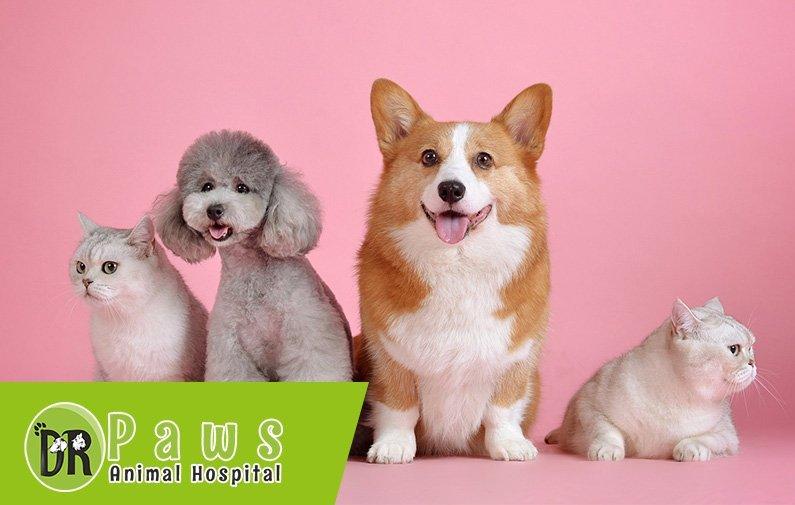 الحمل والتربية عند الكلاب والقطط
