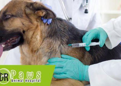 تطعيمات وقائية للحيوانات