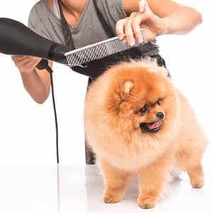 خدمة التنظيف وقص الشعر عند الحيوانات