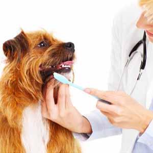 خدمة الجراحة و طب الأسنان للحيوانات