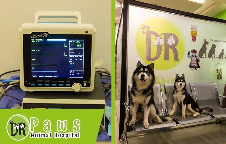 امراض الكلاب والقطط