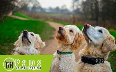 علاج جرب الكلاب