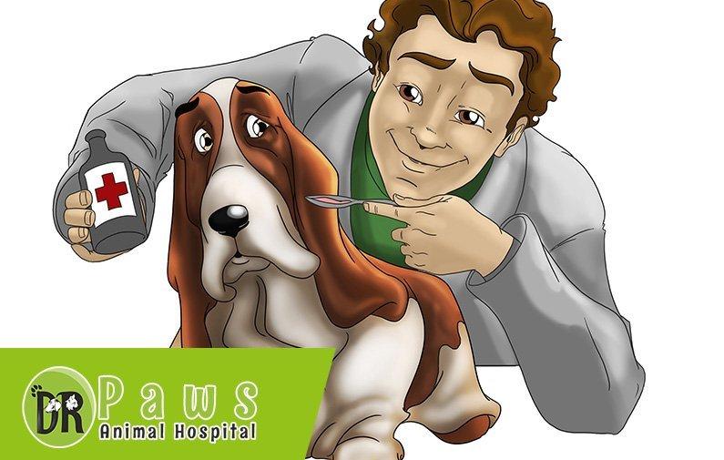 علاج التسمم عند الحيوانات