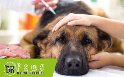 اعراض البرد عند الكلاب