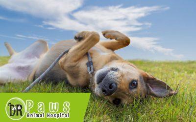 علاج الديدان عند الكلاب